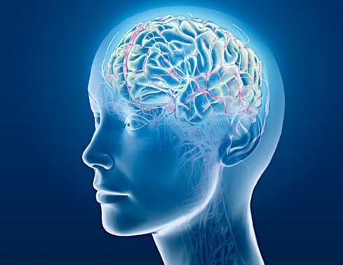 Виды памяти, мозг