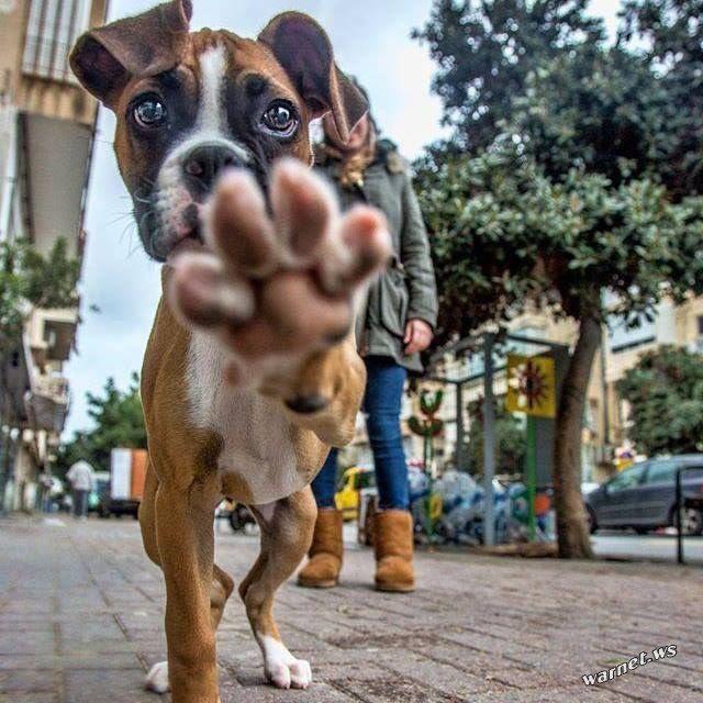 Прикол про собаку в картинках