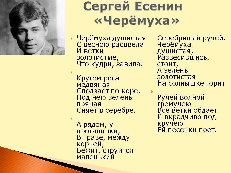Легкий стих Сергея Есенина - Черемуха