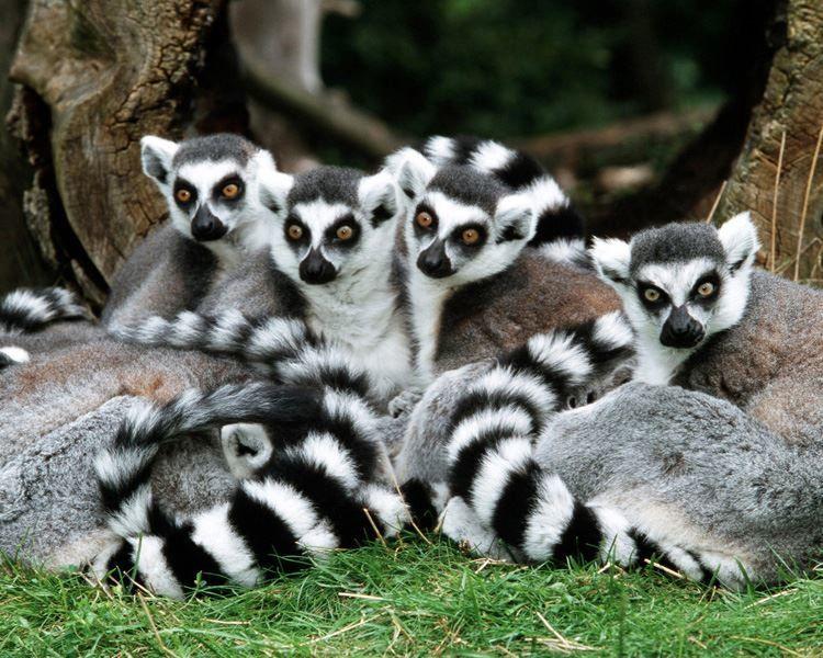 Картинки самых самых красивых животных
