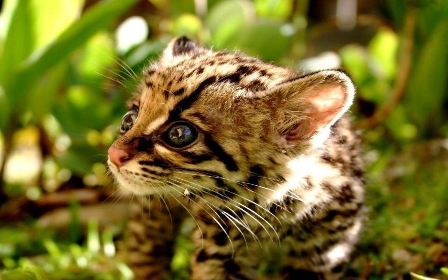 Смотреть фотографии животных бесплатно