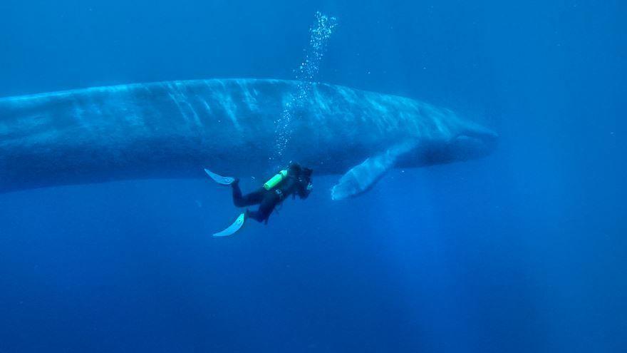 Самое большое животное