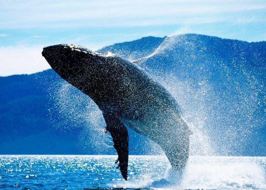 Фото самых больших животных