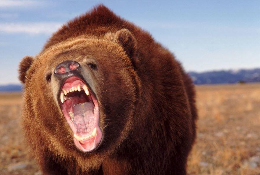 Редкий кадр самого опасного животного - медведь