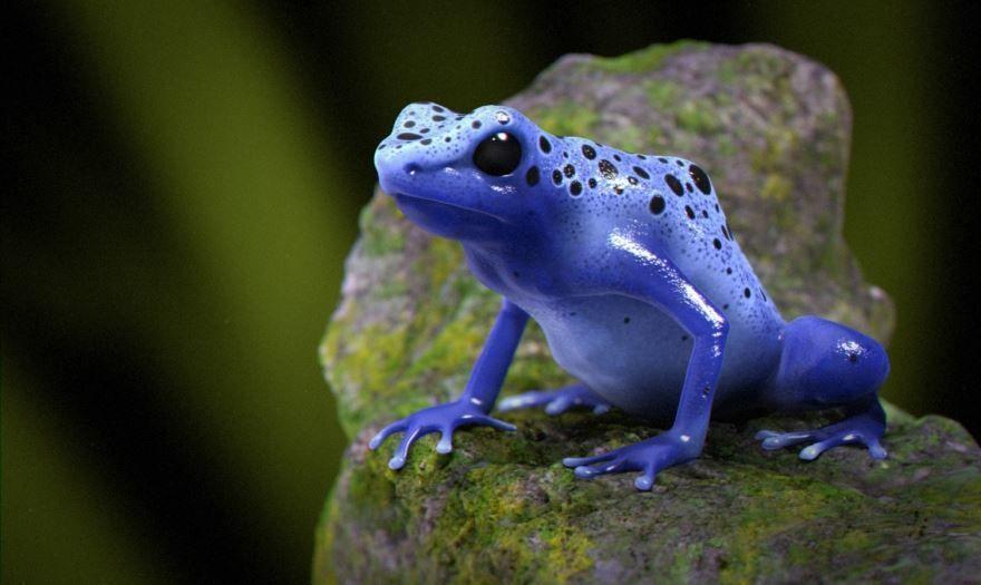 Ядовитая синяя лягушка - самое опасное животное мира - скачать фото бесплатно