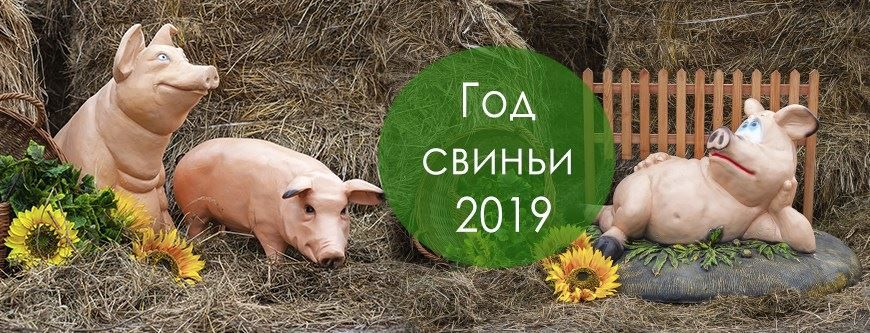 2019 год какого животного? Желтого кабана