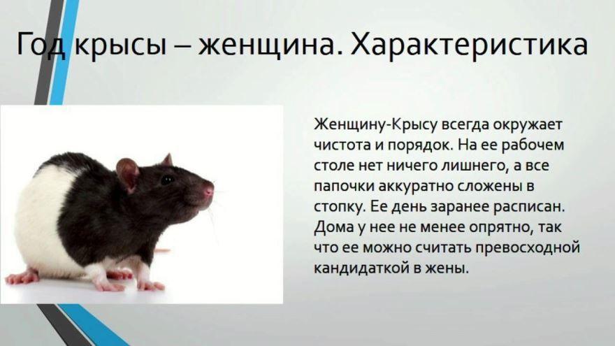 Китайский календарь 2020 год какого животного? Белой крысы