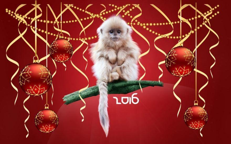 Год животного по восточному календарю - год обезьяны