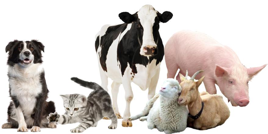 Фотография домашних животных, скачать онлайн