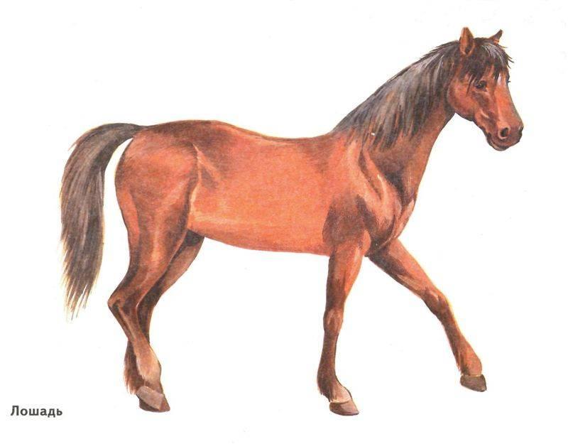 Домашнее животное для срисовки - лошадь