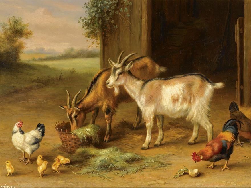 Красивые картинки домашних животных