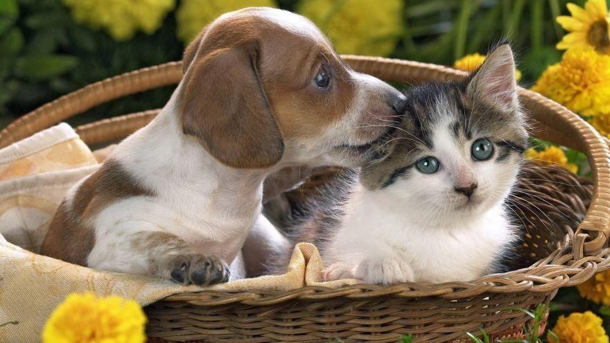 Картинки домашних животных онлайн