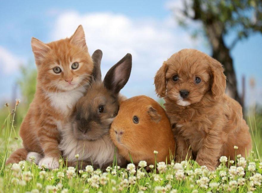 Картинки про домашних животных онлайн