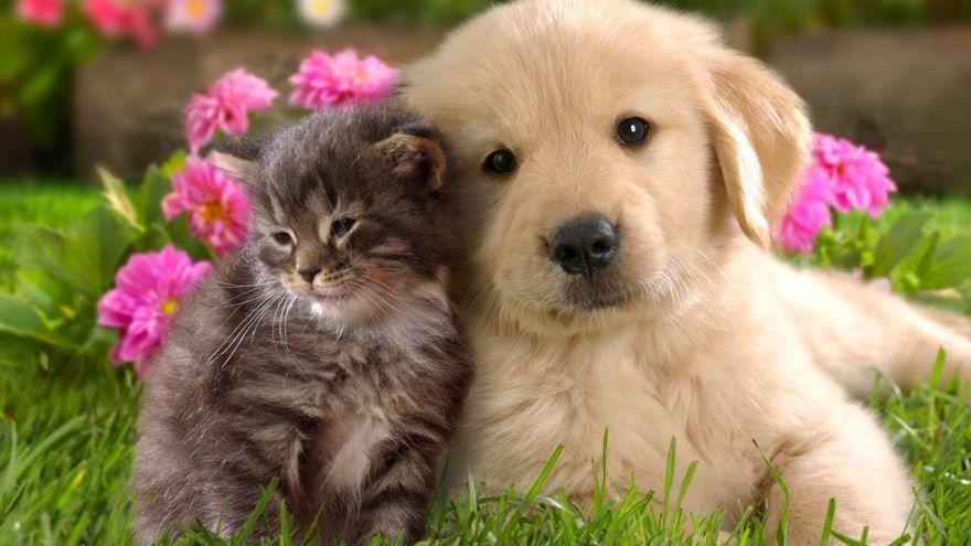 Скачать детские картинки про животных, смотреть онлайн