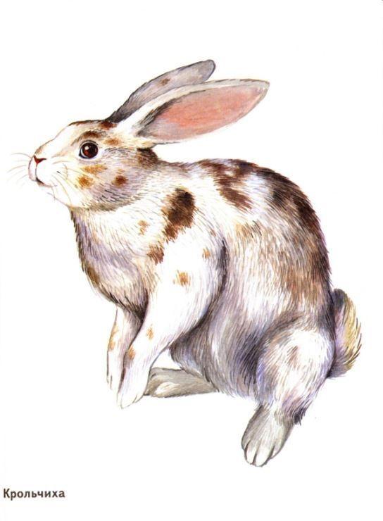 картинки про домашних животных - крольчиха