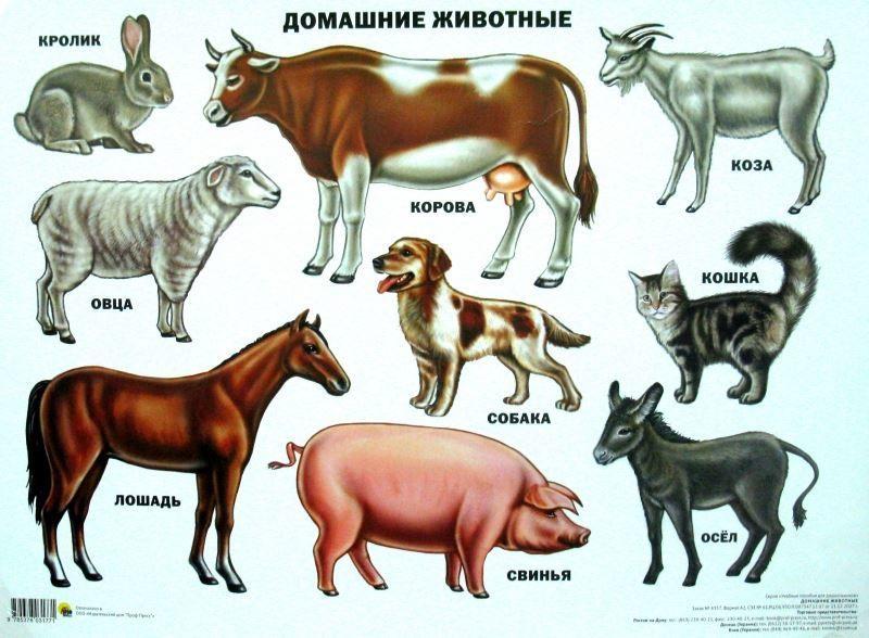 картинки про домашних животных