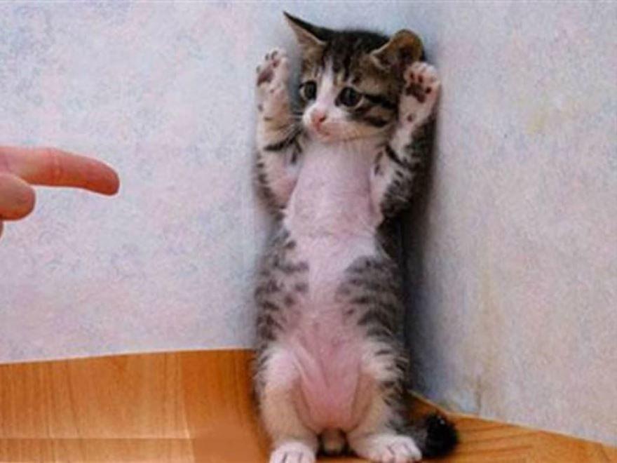 Приколы, прикольные и смешные картинки про животных