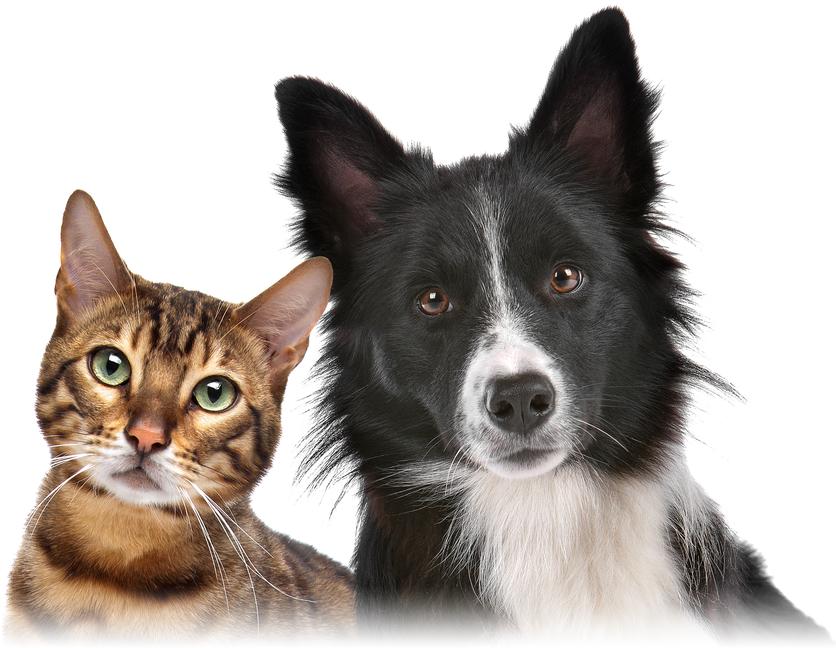 Фотография: кошки и собаки