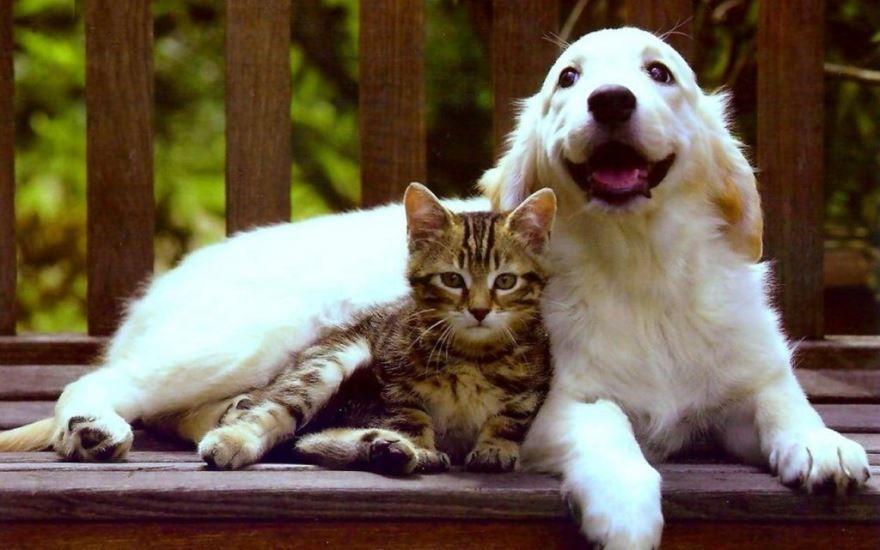 Смотреть, скачать бесплатно фото кошек и собак