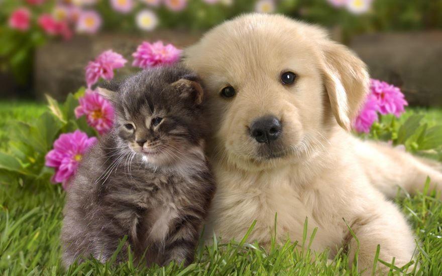 Скачать бесплатно картинки кошек и собак