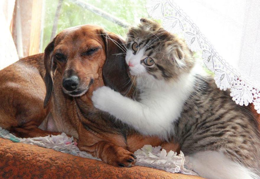 Игры кошки и собаки