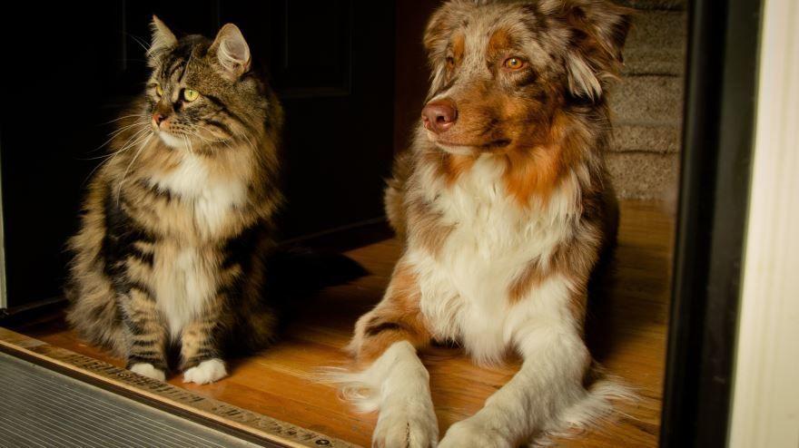 Смотреть бесплатно красивые фото кошки и собаки