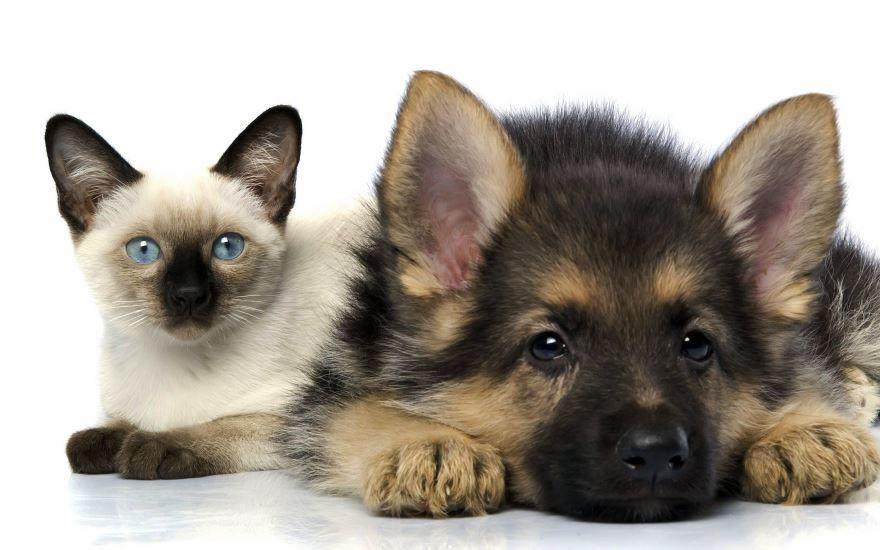 Смотреть фотографии про кошек и собак