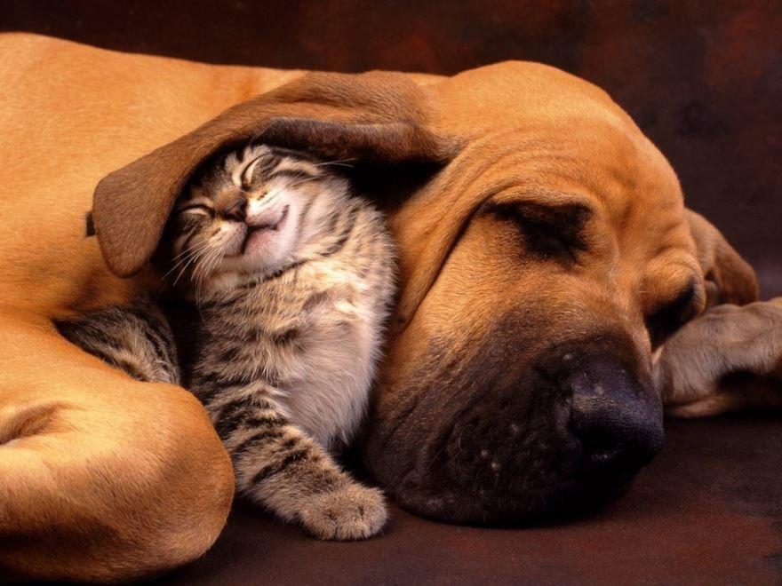 Смешные кошки и собаки, смотреть фото