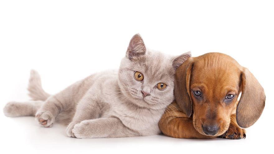 Бесплатно смотреть картинки кошки и собаки
