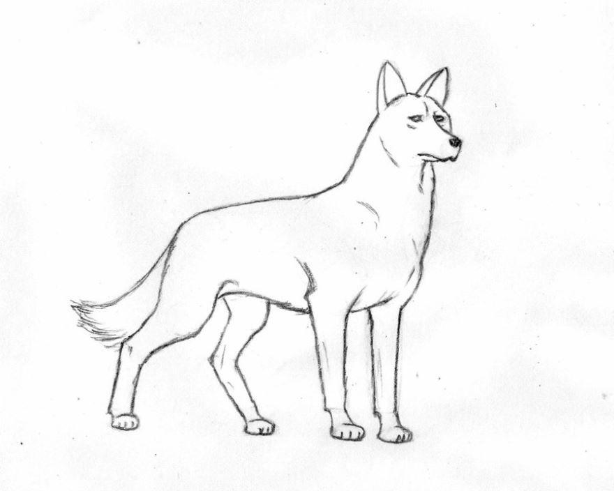 Скачать картинки нарисованной собаки. Рисуем собаку. Бесплатно