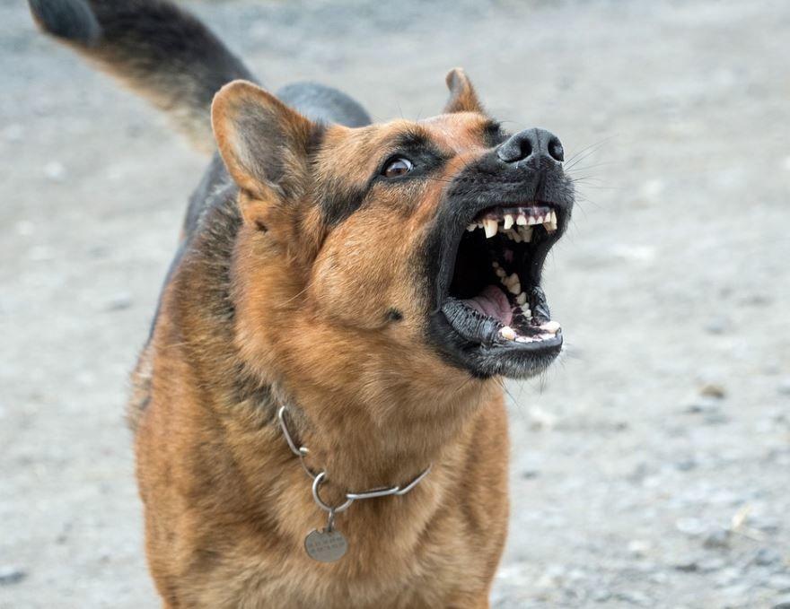 Фотография злой собаки. Злая собака картинки.