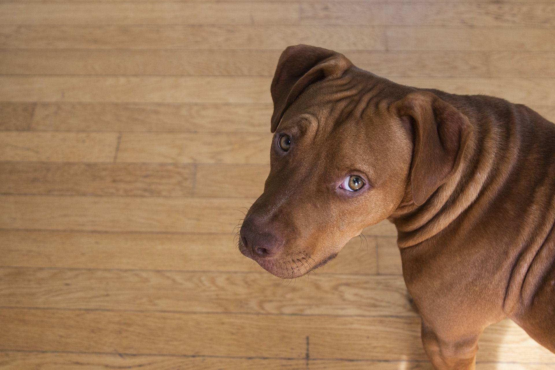 Смотреть фото щенков питбуля онлайн