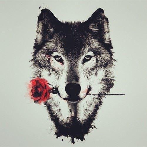 Эскиз головы волка с розой на грудь, спину, плечо для мужчин и женщин