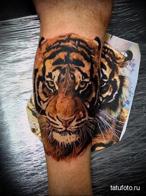 Тату тигра на предплечье, на руке для женщины
