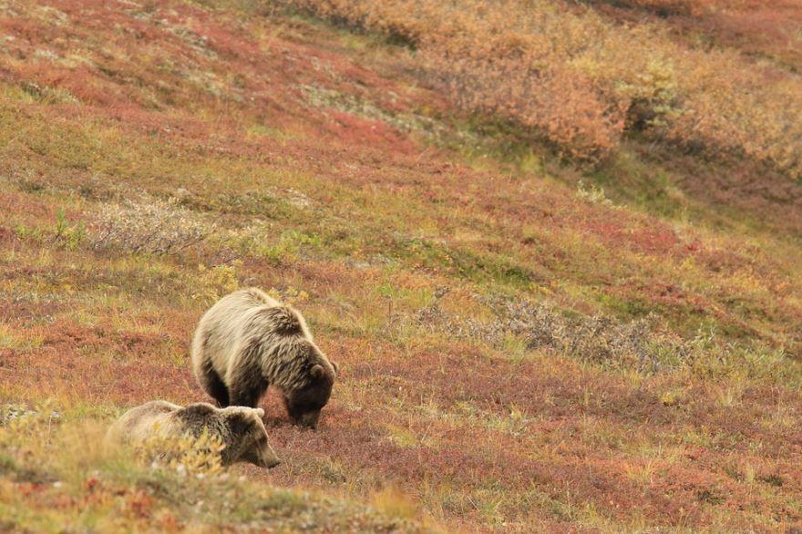 Фото с медведем онлайн