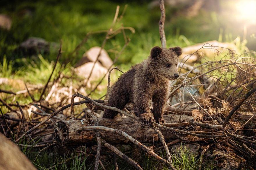 Фото с бурым медведем онлайн