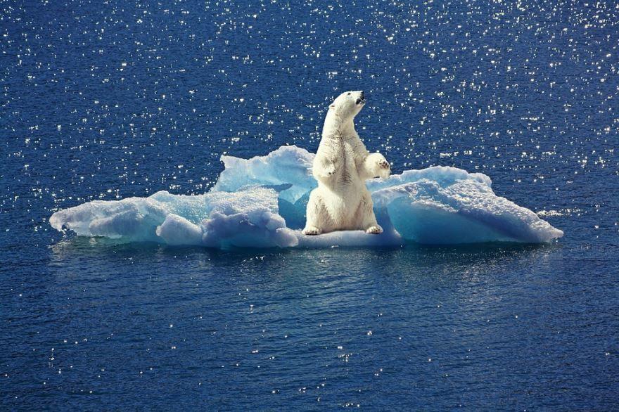 Фото белого медведя онлайн бесплатно для скачивания