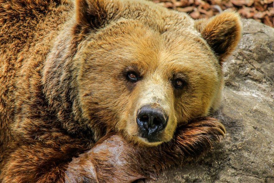 Хорошее качество фото с медведем онлайн