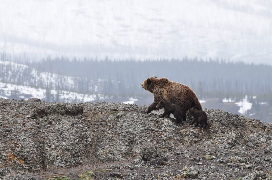 Фото медведя в России, бесплатно
