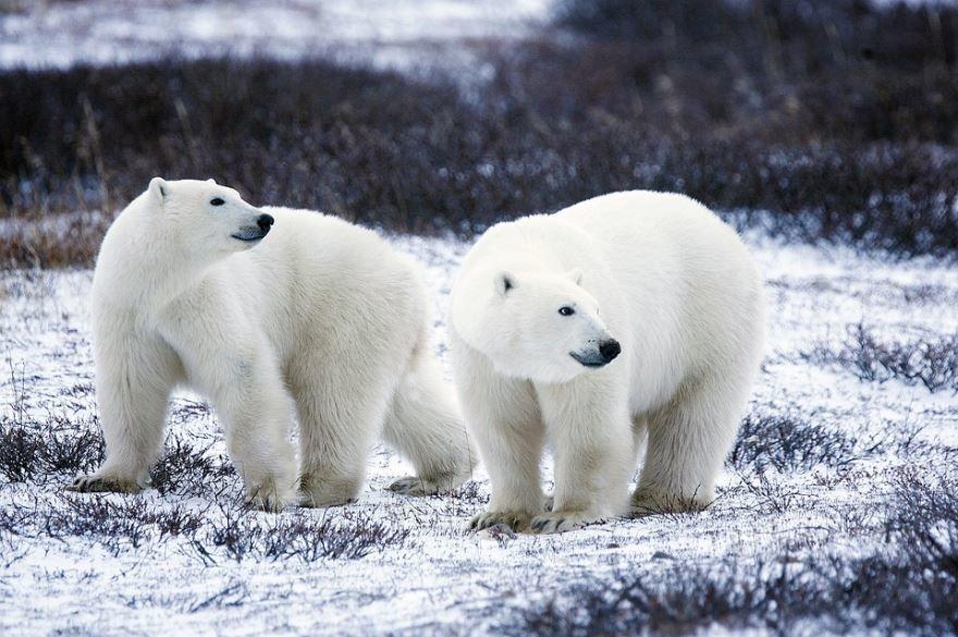 Лучшие фото медведя бесплатно
