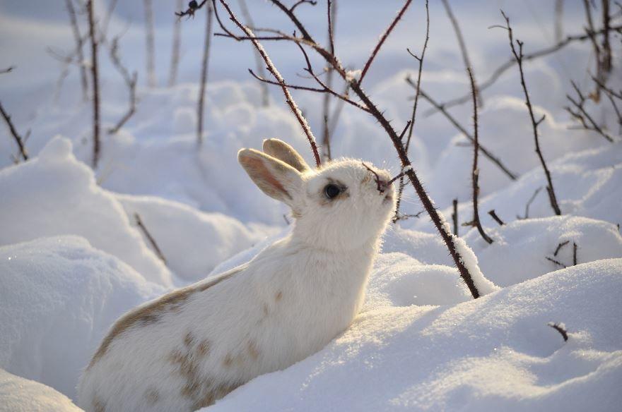 Скачать фото зайчонка - детеныша зайца