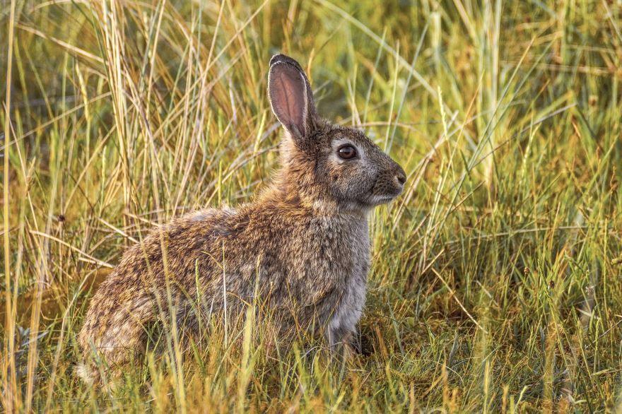 Прикольные и смешные фото зайца