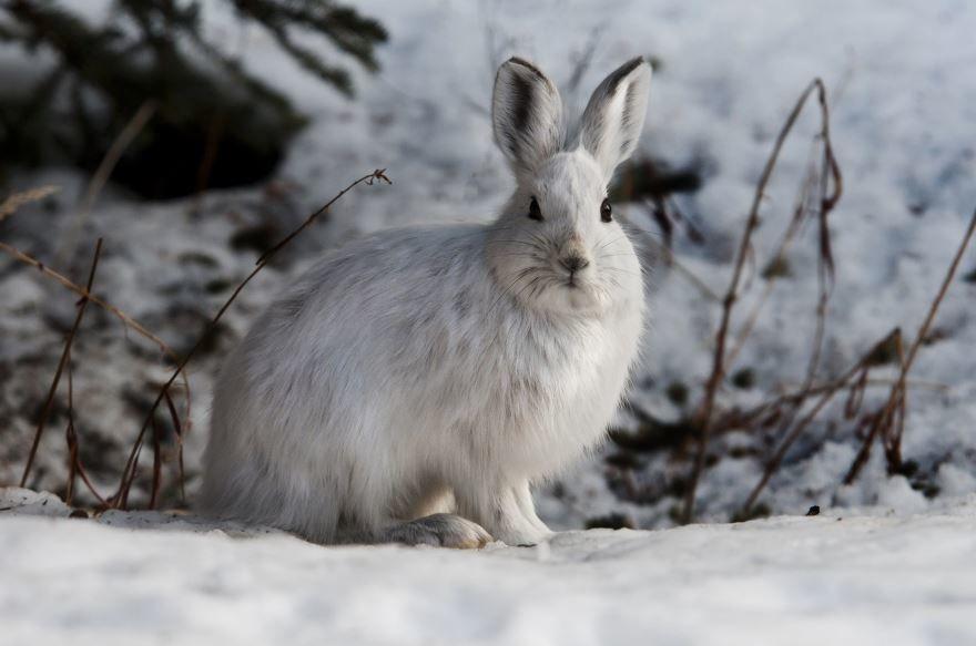 Скачать смешную картинку с зайцем бесплатно