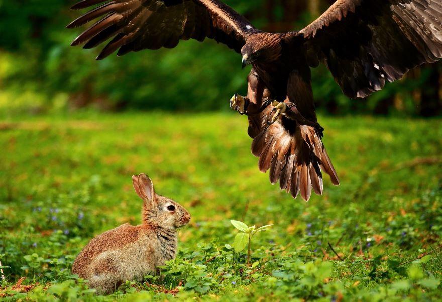 Скачать картинку зайца для детей