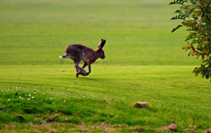 Прикольное фото с зайцем с длинными ушами