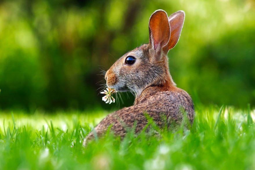 Скачать фото зайца