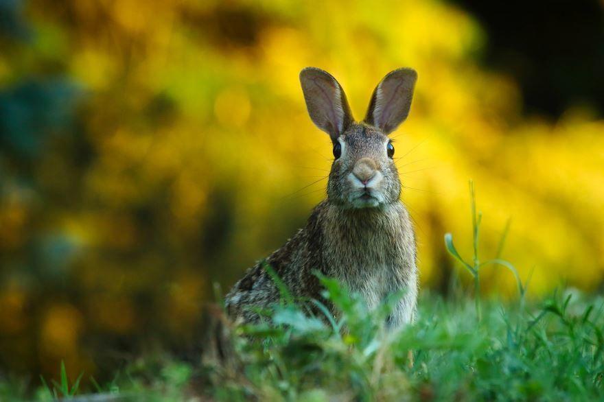 Длинные уши большого зайца - скачать фото