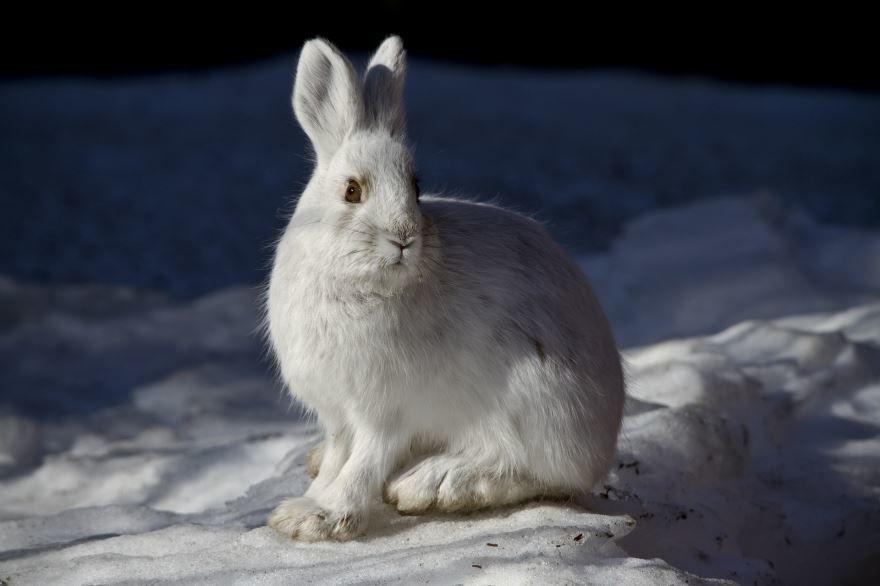 Хорошие фото зайца