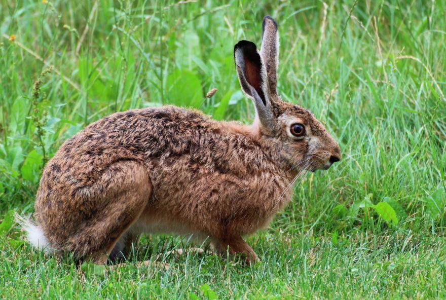 Скачать прикольные и смешные фото зайца