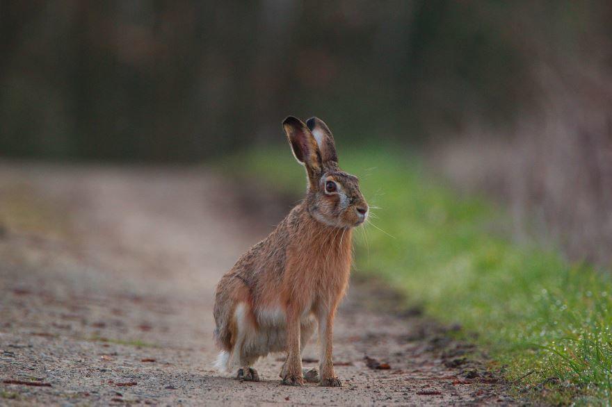 Скачать фото смешного зайца для детей